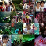 sunshine_in_songkhla_aquarium_web-large